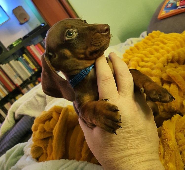 Pablo in der Hand