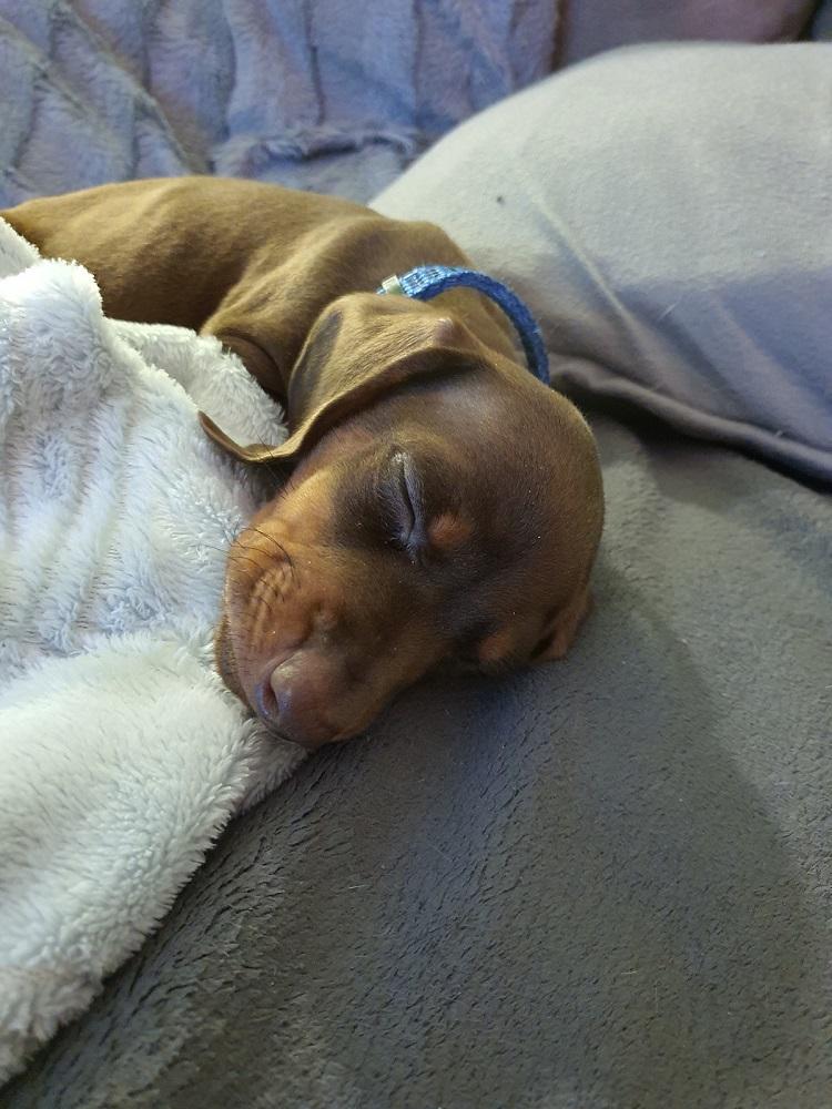 Pablo schlafend
